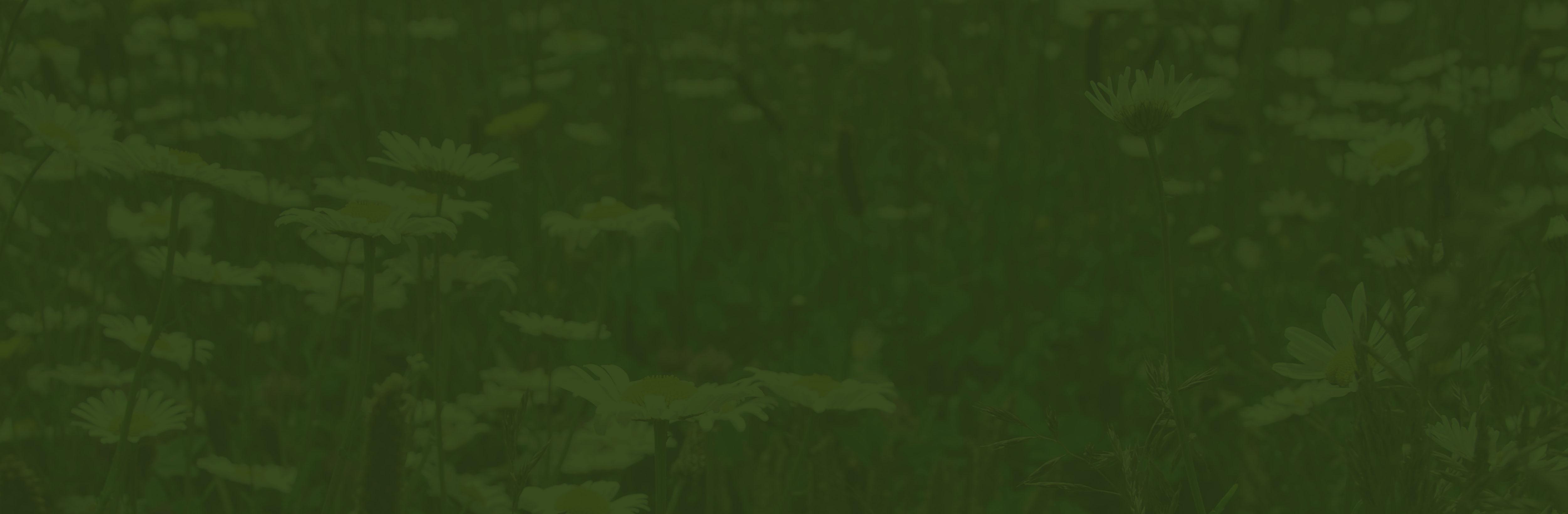 Vegetation Blankets | Wildflower Blankets | Roof substrates