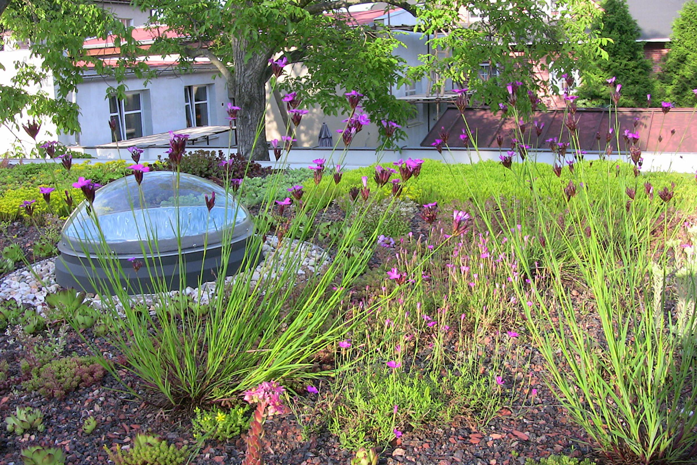 Strešné záhrady