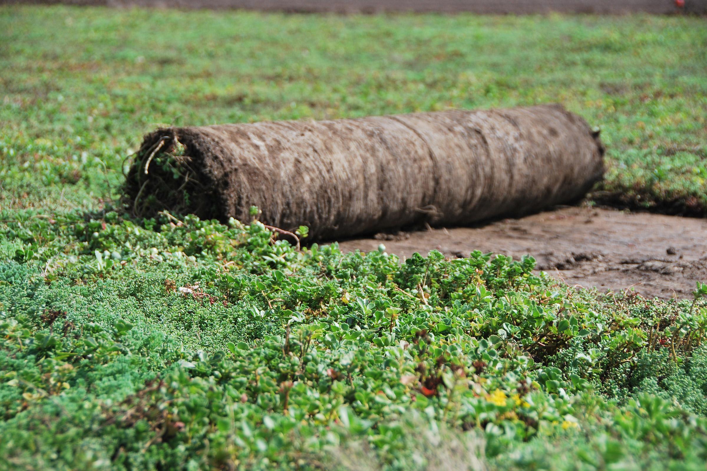 Vegetation Blankets
