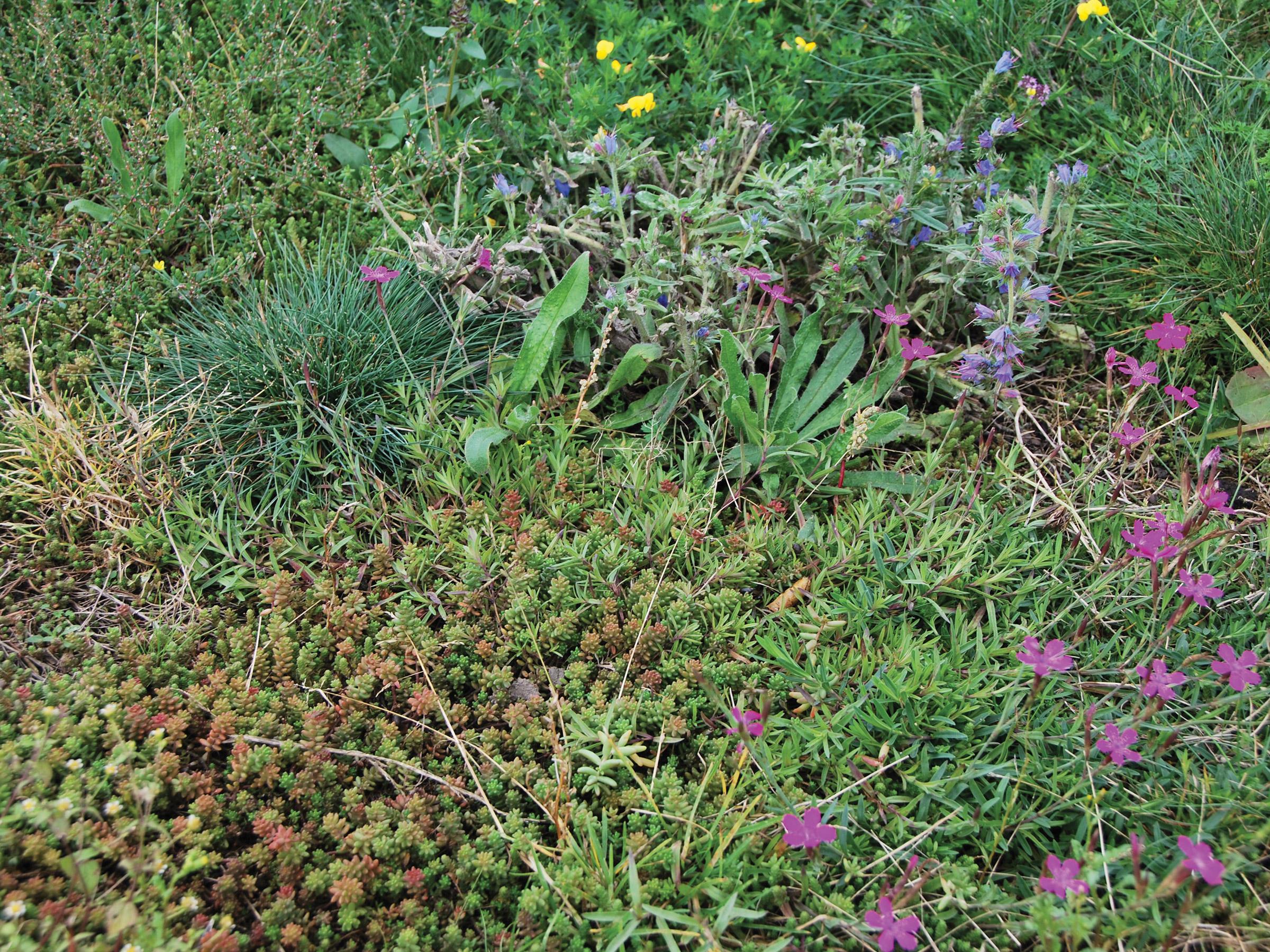 Vegetačné koberce, Skalničky - Tráva - Byliny - MIX